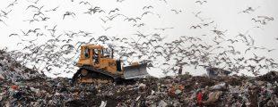 Мусорные полигоны предложили отнести к объектам высоко риска для экологии